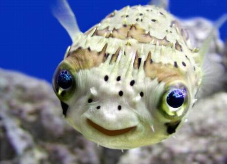 Fish Make You Happy