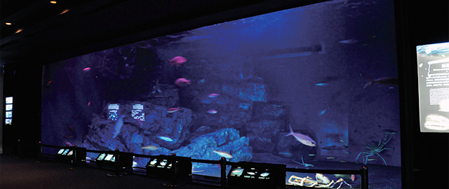Deep Sea Exhibit at Churaumi