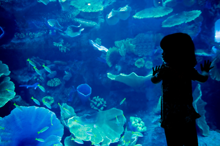 A Child Viewing the Dubai Mall Aquarium