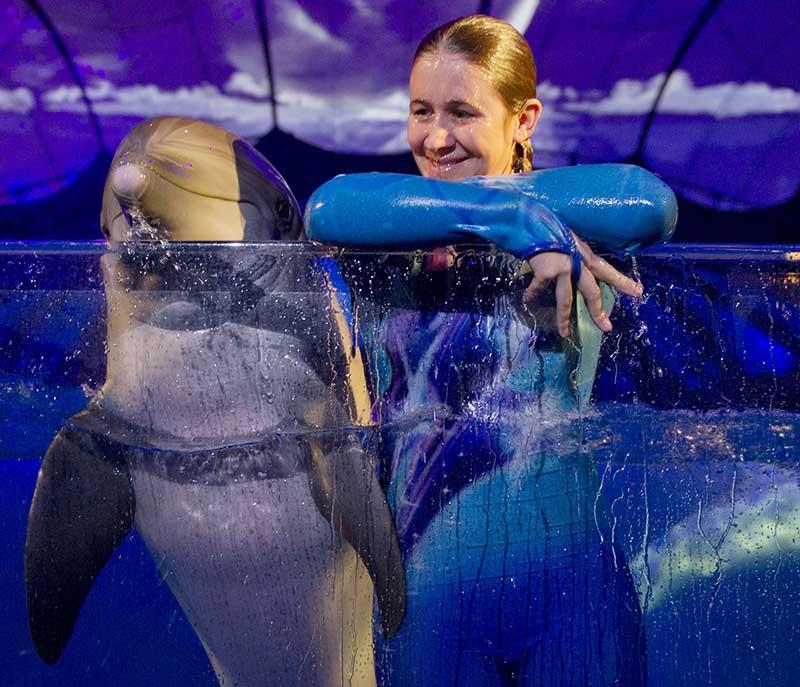 Dolphin Show at the Georgia Aquarium