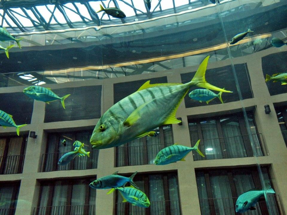 Fish Swimming in the Aqua Dom