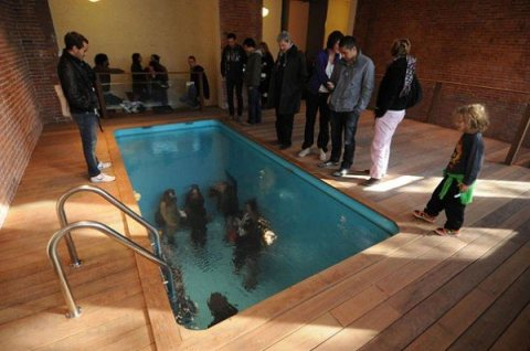 Swimming Pool at the MoMA PS1 Exhibit