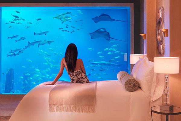 Indoor Aquarium Connected to Suites