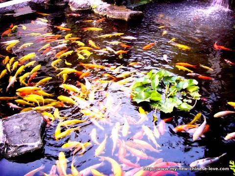 Chinese Goldfish Pond
