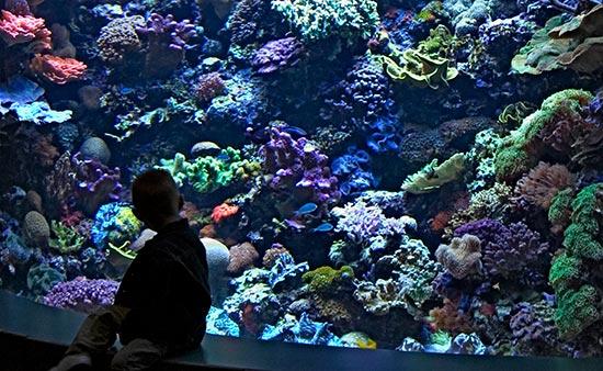 A Heavily-Populated Coral Aquarium