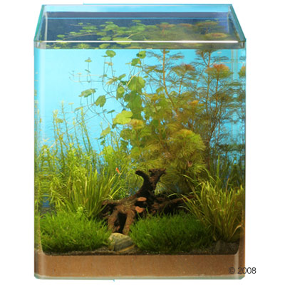 A Small Aquarium with a Dedicated Plant Theme