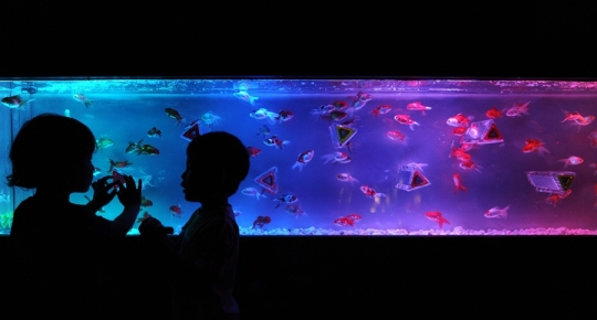 The Color Spectrum Aquarium at the Aquarium Art Exhibit