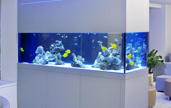 Aquarium by Okeanos Aquascaping