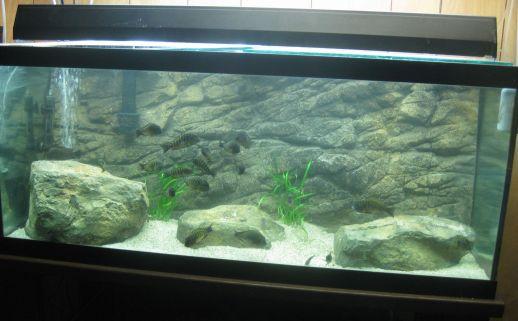 Rocky Aquarium Background