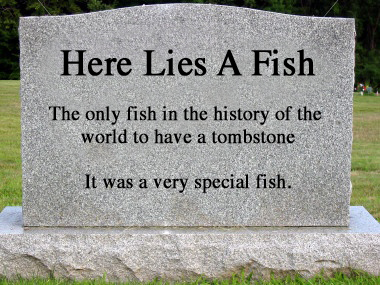 A Fish Tombstone. It was a Very Special Fish