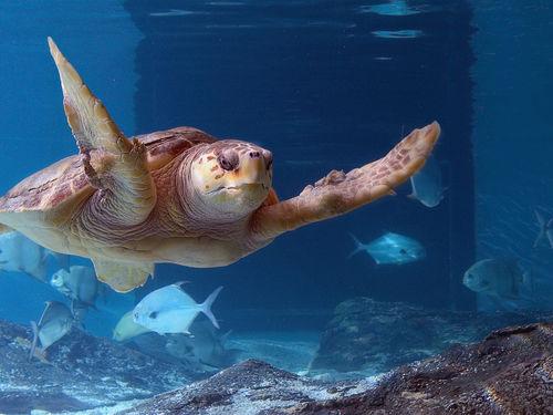 A Turtle at the Maritime Aquarium in Norwalk