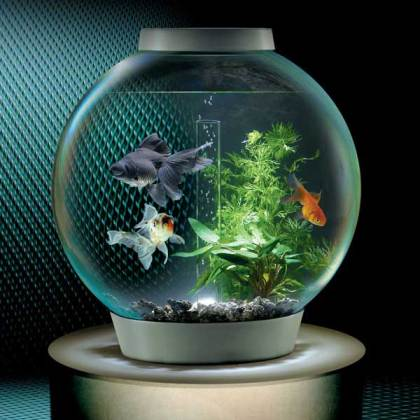 Small Fish Bowl with Goldfish