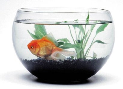 A Simple Fishbowl with a Goldfish