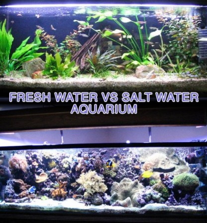 Fresh water vs Salt Water Aquariums