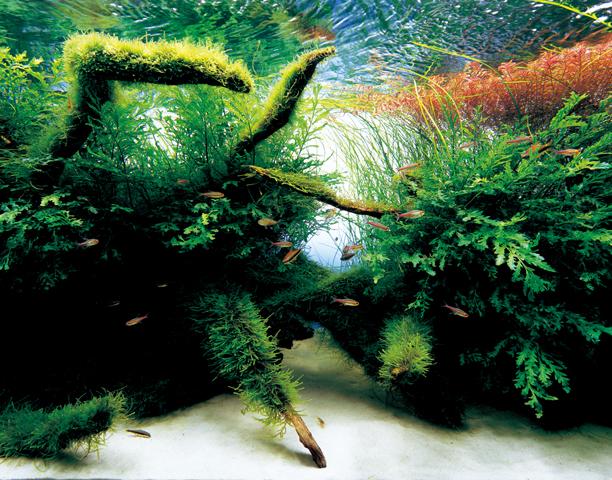 Takashi Amano Freshwater Aquarium