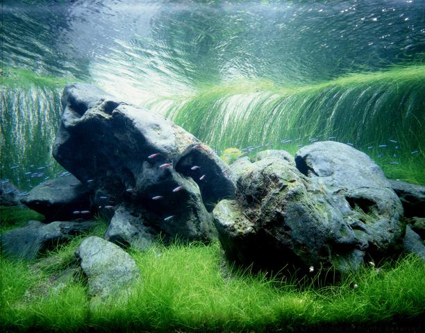 Zen-Inspired Rocks in a Takashi Amano Aquarium
