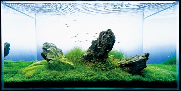 An Aquatic Rock Garden by Takashi Amano