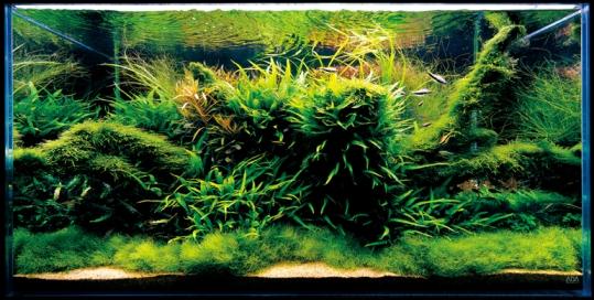 """""""Nature Aquarium"""" Aquatic Garden"""