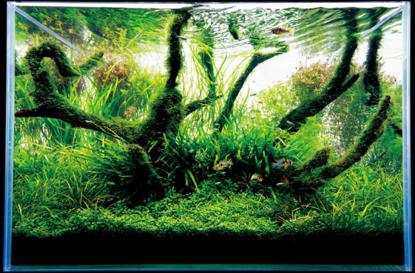 A Freshwater Aquarium by Takashi Amano