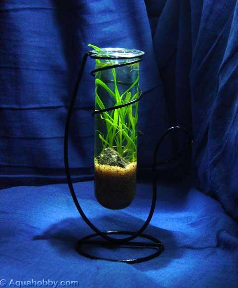 Flower-Tube Aquarium