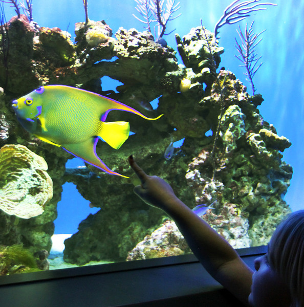 A Birch Aquarium Fish Display