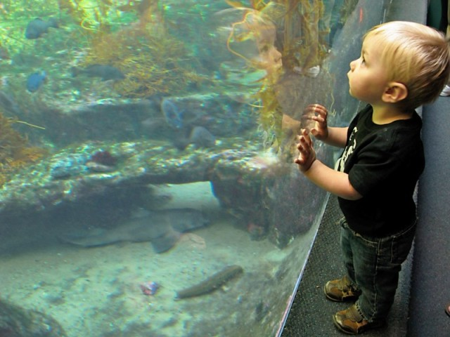 A Child Looking at the Kelp Display at the Birch Aquarium