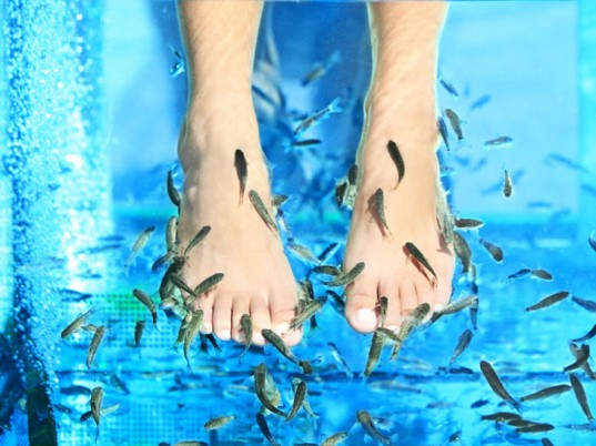 Fish Pedicures are Banned in some parts of Europe and the US