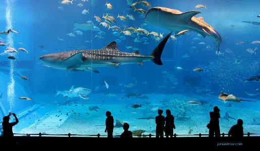 Kuroshio Sea Exhibit