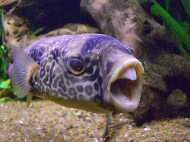 The Nerd Fish