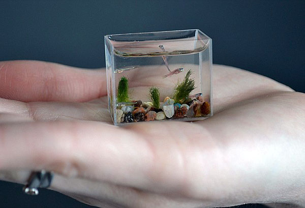 Tiny Aquariums