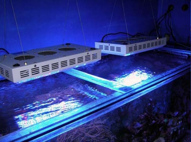 Suspended Aquarium Lighting