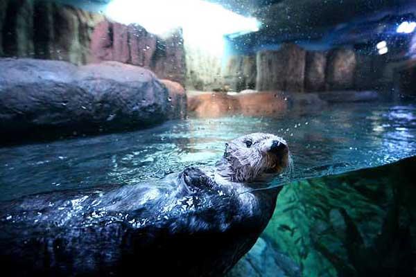 The Sea Otter Exhibit