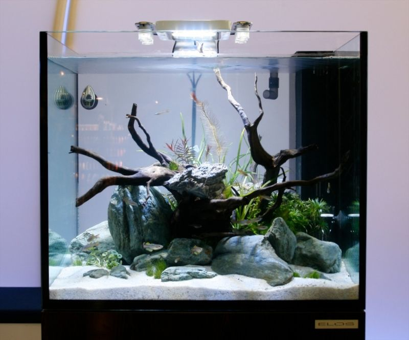 Freshwater Aquarium with LED Light