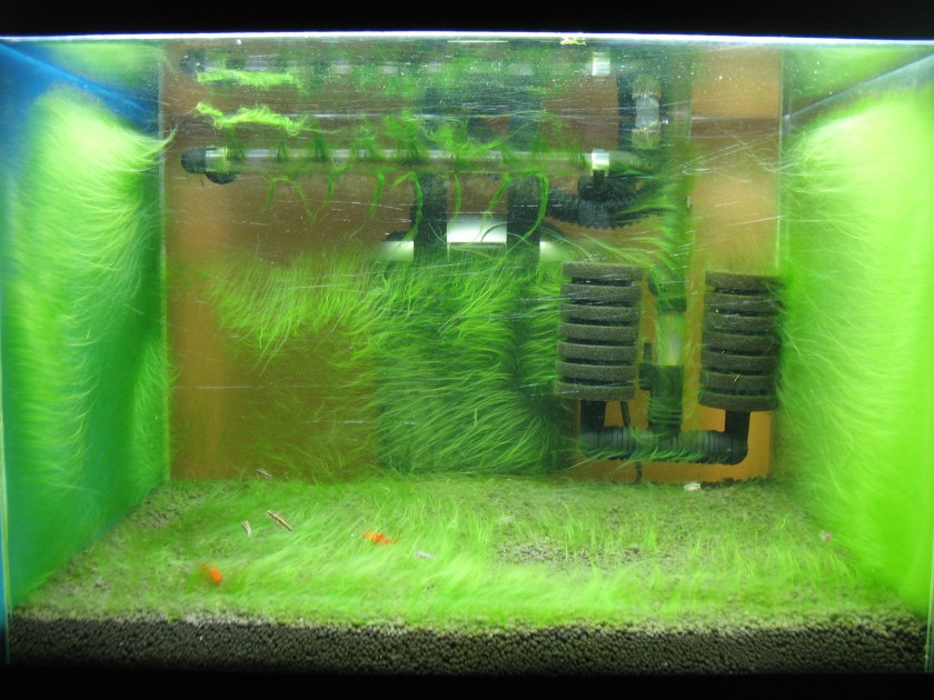 Tank with Algae Coating