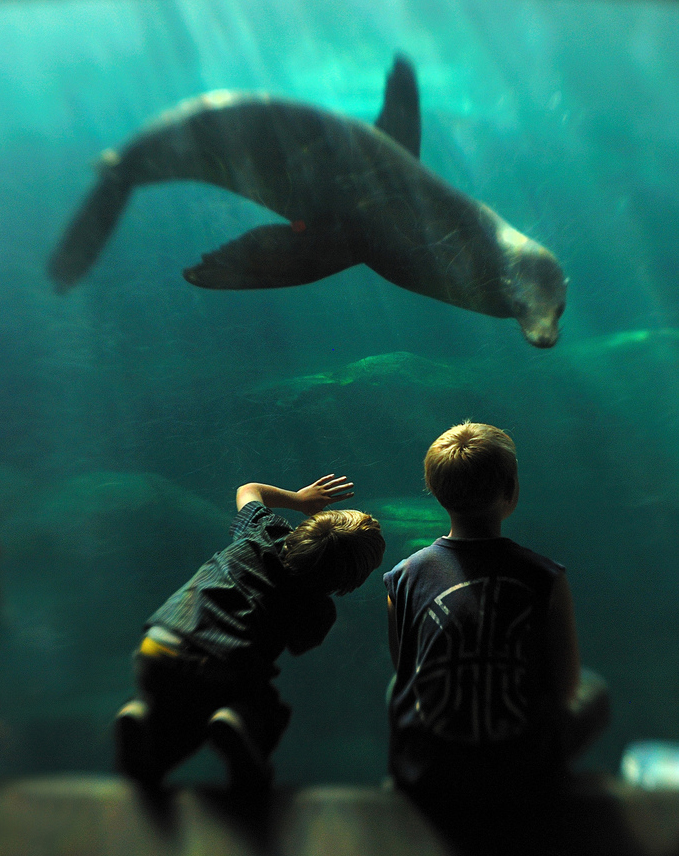 Kids at the Aquarium of the Pacific