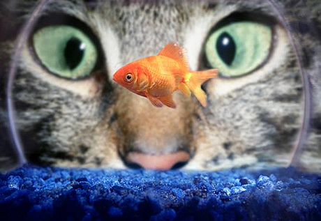 Cats or Dogs or Fish