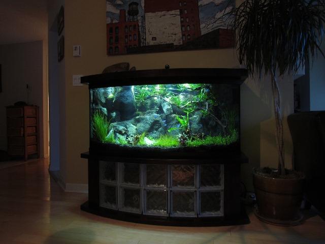 Home Aquarium Aquascape