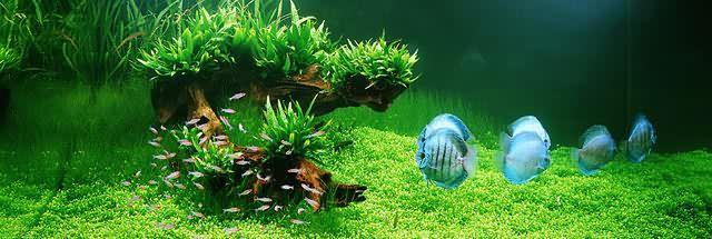Elegant Freshwater Aquascape