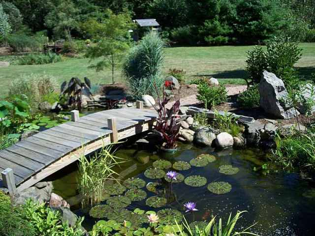 Garden pond with bridge