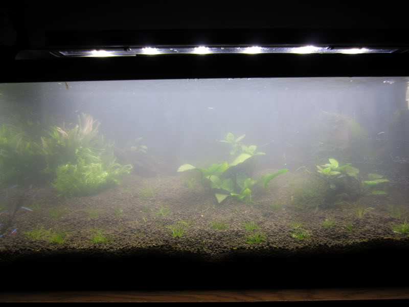 Perform Water Changes to Combat Murky Water