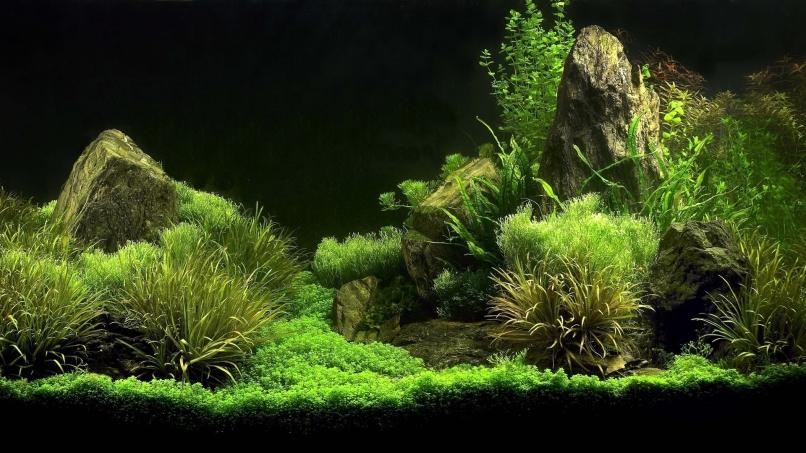 Freshwater Aquarium Setup