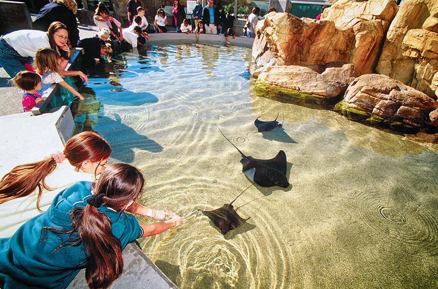 Aquarium of the Pacific Touch Pool