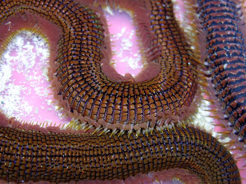 Worm Body