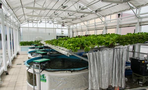 Rooftop Aquaponic Greenhouse
