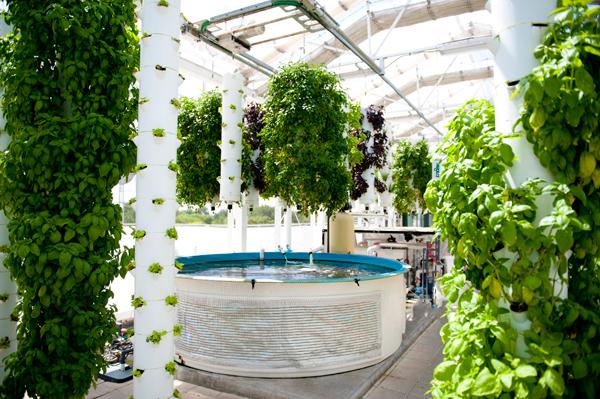 Eco-Friendly Aquatic Gardens