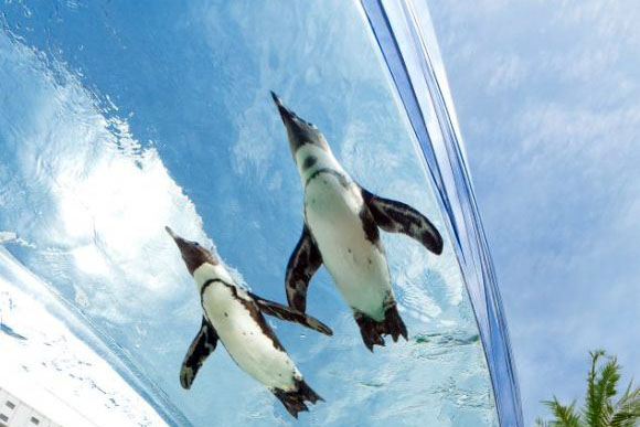 Flying Penguin Exhibit
