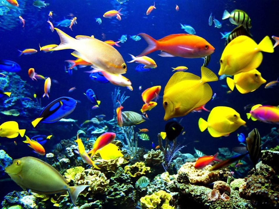 Salt Water Aquarium Fish