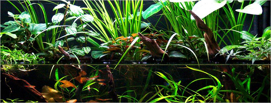 Riparium Plants