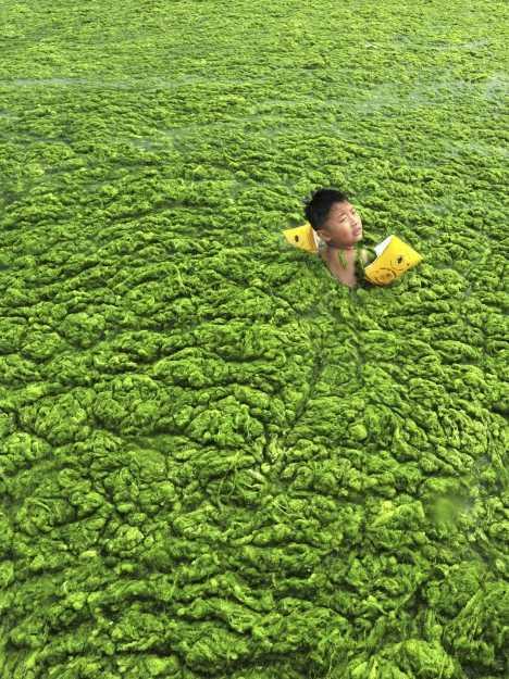 Chinese Algae