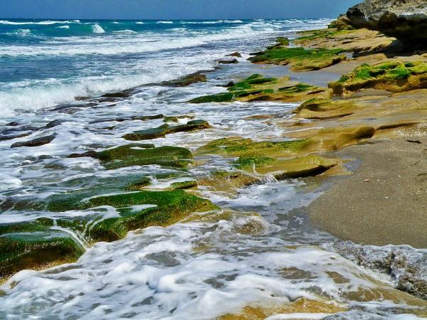 Algae and Global Warming